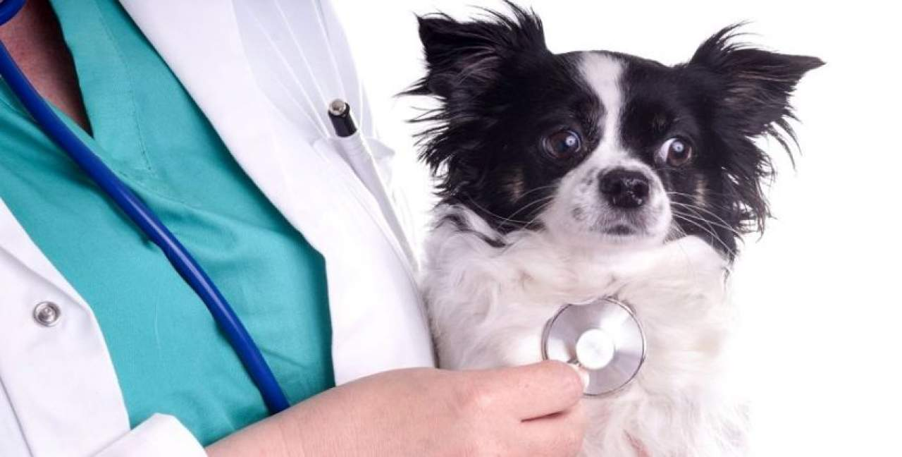 Estudiar veterinaria en Madrid